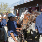 National Yearling Sale 2013 - preparing for exercise