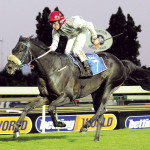 ARCOLA (Caesour - Star Of Arcole by Foveros) - Caradoc Gold Cup G3