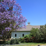 Jacaranda next to feedstore