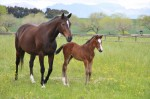 Moggytwoshoes and 2016 foal