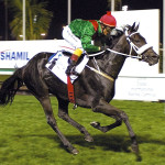 IRRIDESCENCE (Caesour - Meretricious by Dancing Champ) - Balanchine Stakes L