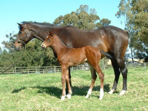 Champion broodmare Star Of Arcole with Ash Cloud