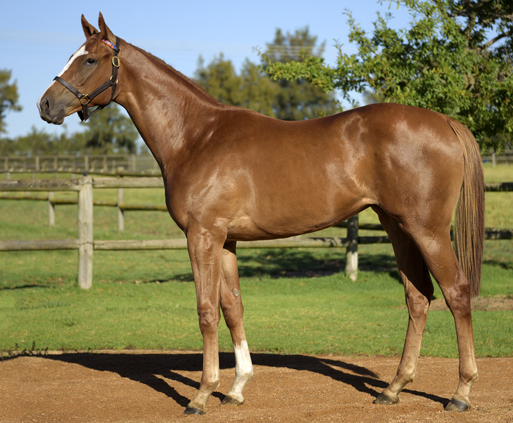 LOT57-FINAL-CLAIM-Varsfontein-Yearlings-VDV-2015