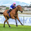 Captain America wins Green Point Stakes